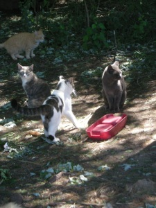 Feral kitties at a local colony.